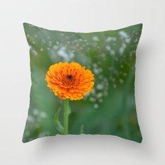 Calendula officinalis  5497 Throw Pillow