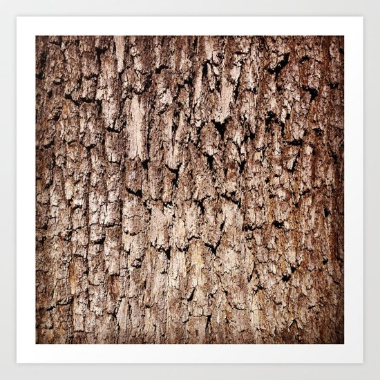 Oak Bark Texture Art Print