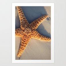 Sugar Starfish II Art Print