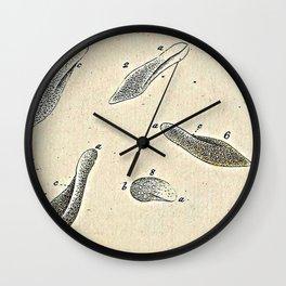Paramecia Wall Clock