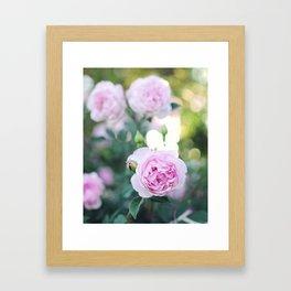 Magic Hour Roses Framed Art Print