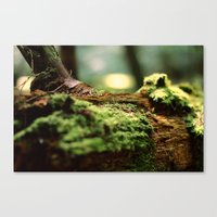 moss Canvas Prints featuring Moss by Anna Bailey