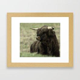 Highland Cattle II Framed Art Print