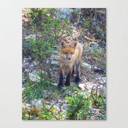 fox 2018-8 Canvas Print