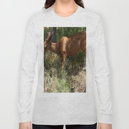 Mule Deer At Zion Park Long Sleeve T-shirt