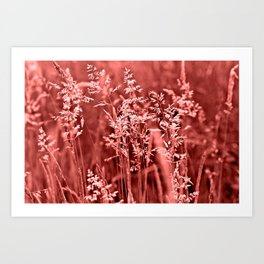 CORAL SOUND of GRASSES Art Print
