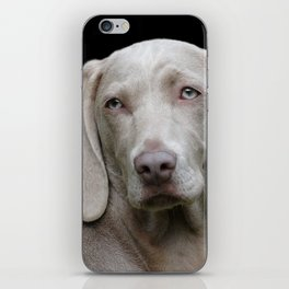 Weimaraner Dog iPhone Skin