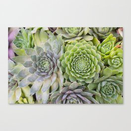 Bountiful Succulents Canvas Print