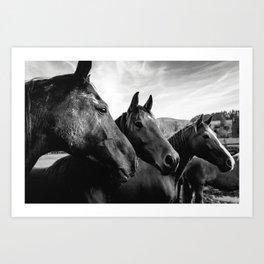 Horse heads Art Print