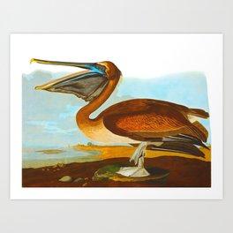 Brown Pelican John James Audubon Vintage Scientific Birds Of America Illustration Art Print
