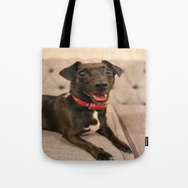 Black Jack Russell / Chihuahua Tote Bag