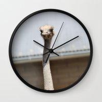 ostrich Wall Clocks featuring Ostrich :) by IowaShots