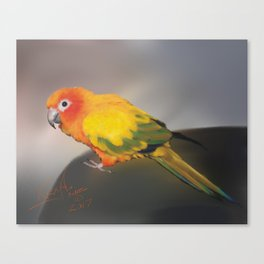 Sun Conure Canvas Print