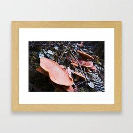 Redwood Fungi Framed Art Print