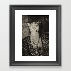 Kitty Yawns Framed Art Print