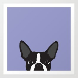 Boston Terrier Violet Art Print