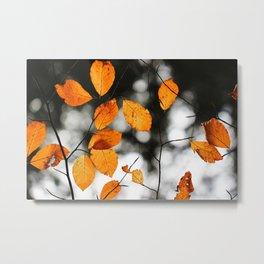 Orange Leafs (Color) Metal Print