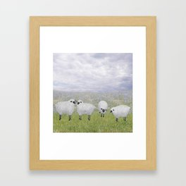 sheep and chicory Framed Art Print