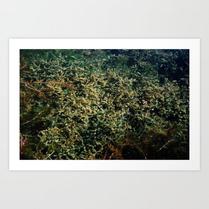 pond garden Art Print