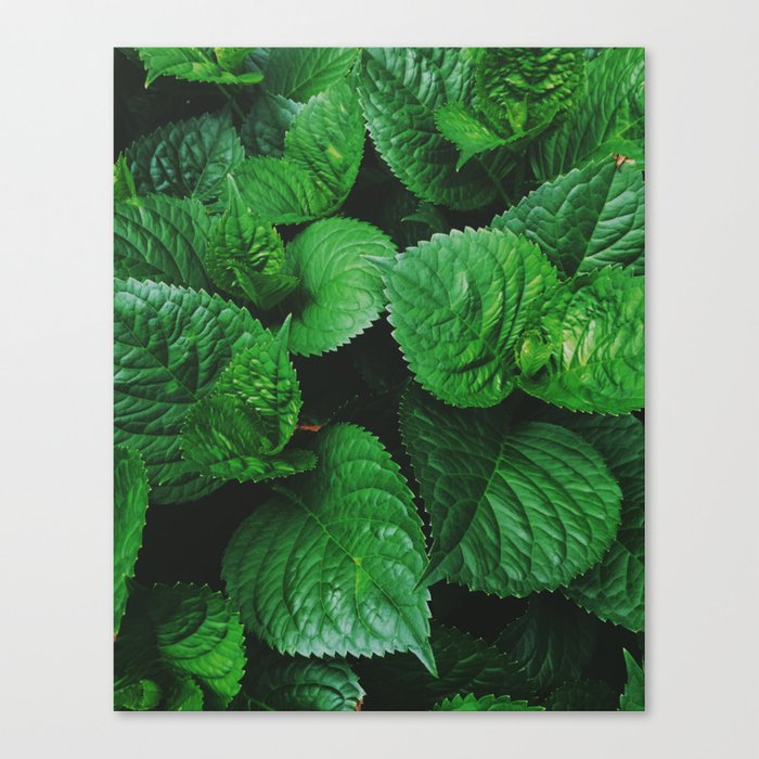 Everlasting Canvas Print