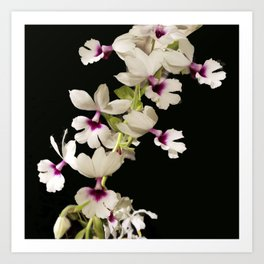 Calanthe rosea Orchid Art Print