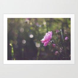Appalachian Rose Art Print