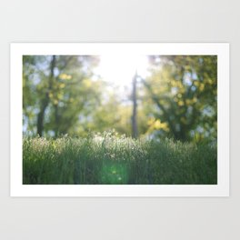 Grass in sunshine Art Print