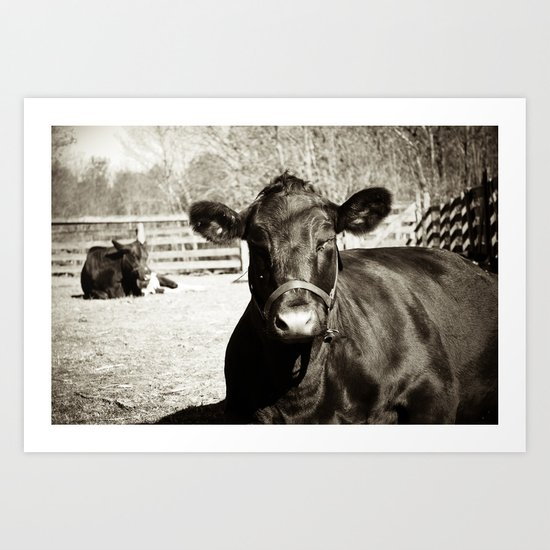 Black Cow Art Print