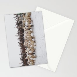Snowy Sheep Stare Stationery Cards