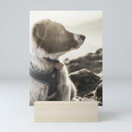 Rowen, the Collie Pup Mini Art Print