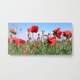 poppy flower no13 Metal Print