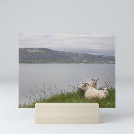 Icelandic sheeps #2 Mini Art Print
