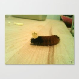 Caterpillar Birthday Party (The Tiny Crown) Canvas Print