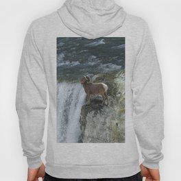 Big Horn Sheep & Rocky Mountain Waterfall Hoody