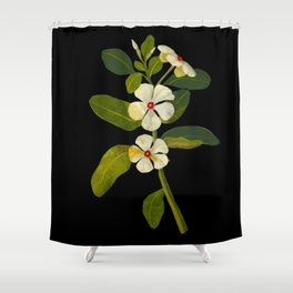 Mary Delany Vinca Rosea Vintage Botanical Art Black Background Realistic Floral Arrangement Shower Curtain