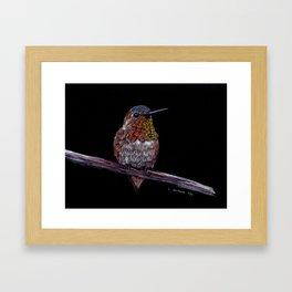 Hummingbird -Frontal View Framed Art Print