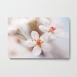 Tiny Cherry Blossoms Metal Print