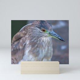 Night Heron Portrait Mini Art Print