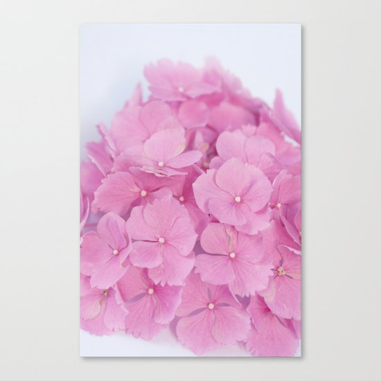 Light-Pink Hydrangeas #1 #decor #art #society6 Canvas Print