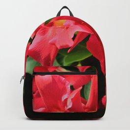 Mandevilla  Backpack