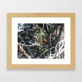 Squirrel in Tree Framed Art Print