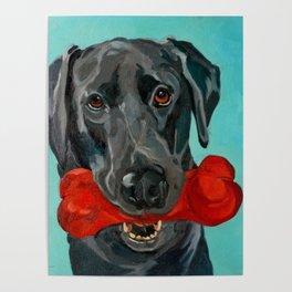 Ozzie the Black Labrador Retriever Poster
