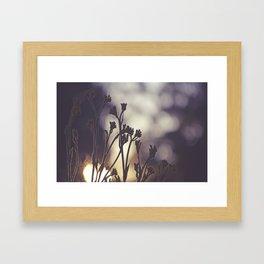 Kangaroo Paws at Sunset Framed Art Print