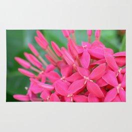 Pink Petals CR Rug