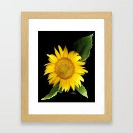 Summer Yellow Sunflower, Scanography Art, Flowers Framed Art Print