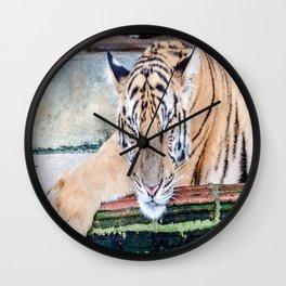 Tiger Sleeping Wall Clock