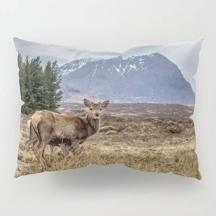 Wild red stag in the highlands, Scotland Pillow Sham