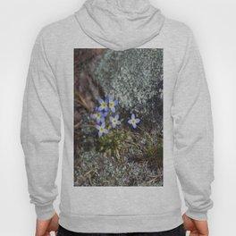 Thyme Leaved Bluets #2 Hoody