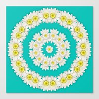 coasters Canvas Prints featuring White Daisies on Turquoise Background by Lena Photo Art