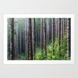 Trees: II // Oregon Art Print